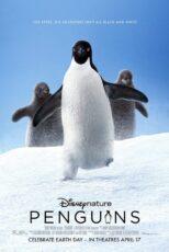 دانلود مستند پنگوئن ها با دوبله فارسی Penguins 2019